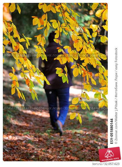 ESY-051880144. Стоковое фото, фотограф Zoonar.com/Walter J.Pilsak / easy Fotostock / Фотобанк Лори