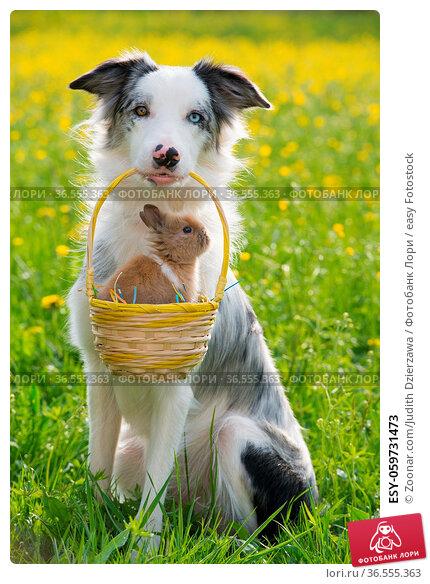 ESY-059731473. Стоковое фото, фотограф Zoonar.com/Judith Dzierzawa / easy Fotostock / Фотобанк Лори