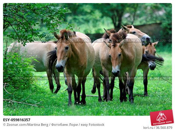ESY-059816357. Стоковое фото, фотограф Zoonar.com/Martina Berg / easy Fotostock / Фотобанк Лори