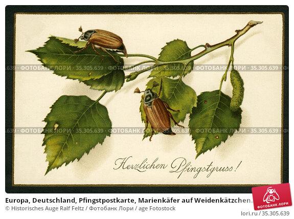Europa, Deutschland, Pfingstpostkarte, Marienkäfer auf Weidenkätzchen... Редакционное фото, фотограф Historisches Auge Ralf Feltz / age Fotostock / Фотобанк Лори