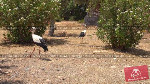 Купить «Exotic birds walking in a park on Cyprus island», видеоролик № 26606783, снято 27 июня 2017 г. (c) Гурьянов Андрей / Фотобанк Лори
