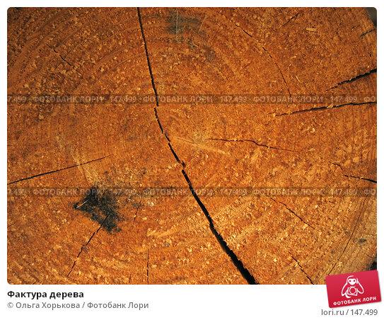Фактура дерева, фото № 147499, снято 13 августа 2007 г. (c) Ольга Хорькова / Фотобанк Лори