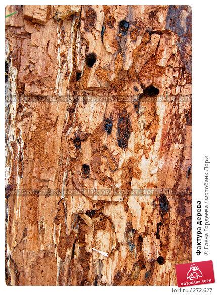 Фактура дерева, фото № 272627, снято 3 мая 2008 г. (c) Елена Гордеева / Фотобанк Лори