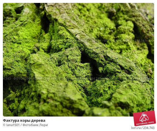 Фактура коры дерева, эксклюзивное фото № 234743, снято 26 марта 2008 г. (c) lana1501 / Фотобанк Лори