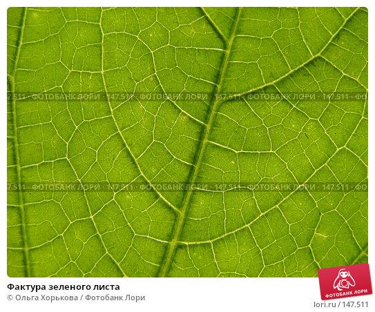 Фактура зеленого листа, фото № 147511, снято 13 августа 2007 г. (c) Ольга Хорькова / Фотобанк Лори