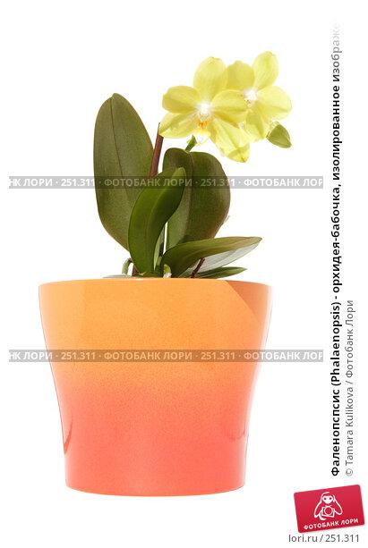Фаленопспсис (Phalaenopsis) - орхидея-бабочка, изолированное изображение, фото № 251311, снято 14 апреля 2008 г. (c) Tamara Kulikova / Фотобанк Лори