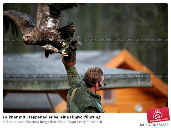 Falkner mit Steppenadler bei eine Flugvorführung. Стоковое фото, фотограф Zoonar.com/Martina Berg / easy Fotostock / Фотобанк Лори