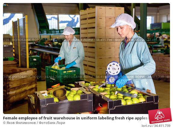 Female employee of fruit warehouse in uniform labeling fresh ripe apples in crates. Стоковое фото, фотограф Яков Филимонов / Фотобанк Лори
