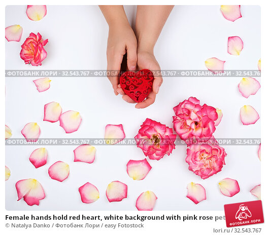 Купить «Female hands hold red heart, white background with pink rose petals, top view, holiday backdrop.», фото № 32543767, снято 31 мая 2019 г. (c) easy Fotostock / Фотобанк Лори