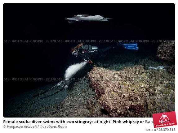Купить «Female scuba diver swims with two stingrays at night. Pink whipray or Banana-tail ray (Himantura fai)», фото № 28370515, снято 30 марта 2018 г. (c) Некрасов Андрей / Фотобанк Лори