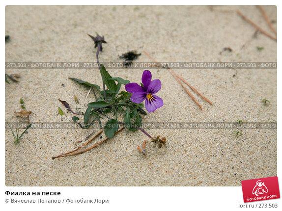 Фиалка на песке, фото № 273503, снято 21 декабря 2007 г. (c) Вячеслав Потапов / Фотобанк Лори