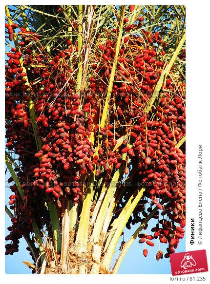 Купить «Финики», фото № 81235, снято 20 августа 2007 г. (c) Лифанцева Елена / Фотобанк Лори