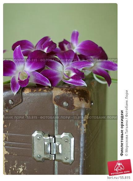 Фиолетовые орхидеи, фото № 55815, снято 27 сентября 2006 г. (c) Морозова Татьяна / Фотобанк Лори