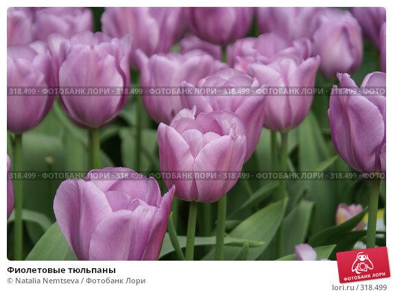 Фиолетовые тюльпаны, эксклюзивное фото № 318499, снято 8 апреля 2008 г. (c) Natalia Nemtseva / Фотобанк Лори