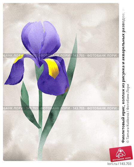 Купить «Фиолетовый ирис, коллаж из рисунка и акварельных разводов, акварельный фон», иллюстрация № 143703 (c) Tamara Kulikova / Фотобанк Лори