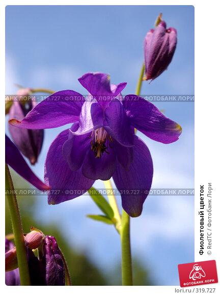Купить «Фиолетовый цветок», фото № 319727, снято 9 июня 2008 г. (c) RedTC / Фотобанк Лори