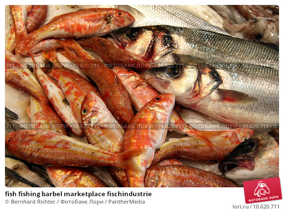 fish fishing barbel marketplace fischindustrie. Стоковое фото, фотограф Bernhard Richter / PantherMedia / Фотобанк Лори