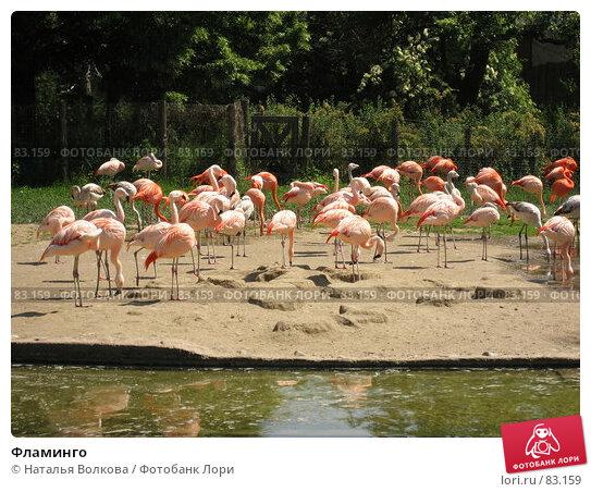 Фламинго, эксклюзивное фото № 83159, снято 19 мая 2007 г. (c) Наталья Волкова / Фотобанк Лори