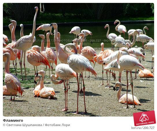 Фламинго, фото № 200727, снято 9 мая 2006 г. (c) Светлана Шушпанова / Фотобанк Лори