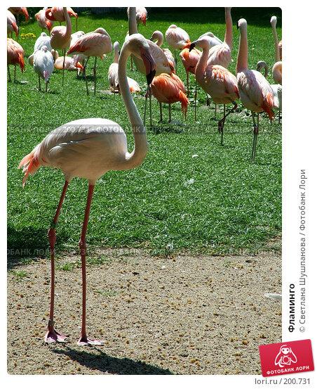 Фламинго, фото № 200731, снято 9 мая 2006 г. (c) Светлана Шушпанова / Фотобанк Лори