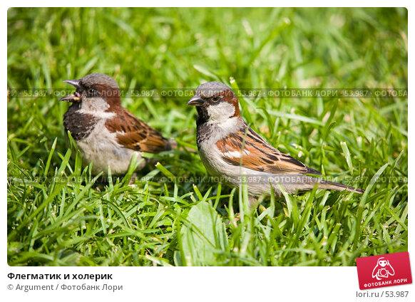Флегматик и холерик, фото № 53987, снято 14 июня 2007 г. (c) Argument / Фотобанк Лори