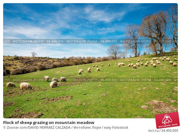 Flock of sheep grazing on mountain meadow. Стоковое фото, фотограф Zoonar.com/DAVID HERRAEZ CALZADA / easy Fotostock / Фотобанк Лори