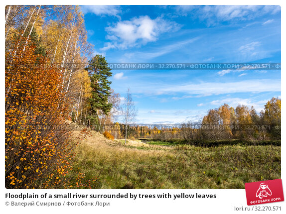 Купить «Floodplain of a small river surrounded by trees with yellow leaves», фото № 32270571, снято 5 октября 2019 г. (c) Валерий Смирнов / Фотобанк Лори