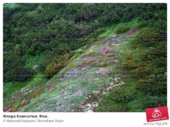 Флора Камчатки. Фон., фото № 162279, снято 26 июня 2007 г. (c) Николай Коржов / Фотобанк Лори