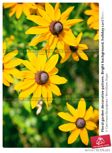 Купить «Floral garden decorative pattern. Bright background, holiday card from the buds of blooming yellow echinacea. Perennial medicinal perennial cultivated plant of the rudbeckia of the astrov family», фото № 33379223, снято 19 июня 2019 г. (c) Светлана Евграфова / Фотобанк Лори