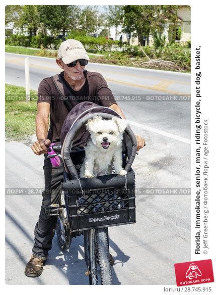 Купить «Florida, Immokalee, senior, man, riding bicycle, pet dog, basket,», фото № 28745915, снято 26 сентября 2017 г. (c) age Fotostock / Фотобанк Лори