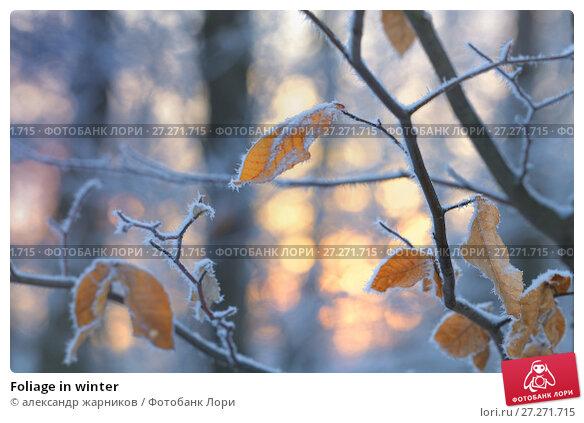 Купить «Foliage in winter», фото № 27271715, снято 27 ноября 2017 г. (c) александр жарников / Фотобанк Лори