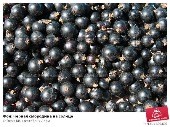 Купить «Фон: черная смородина на солнце», фото № 620607, снято 20 июля 2008 г. (c) Denis Kh. / Фотобанк Лори