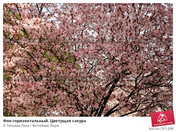 Фон горизонтальный. Цветущая сакура, эксклюзивное фото № 311299, снято 10 марта 2007 г. (c) Татьяна Лата / Фотобанк Лори