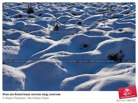 Фон из болотных кочек под снегом, фото № 169151, снято 31 декабря 2007 г. (c) Борис Панасюк / Фотобанк Лори