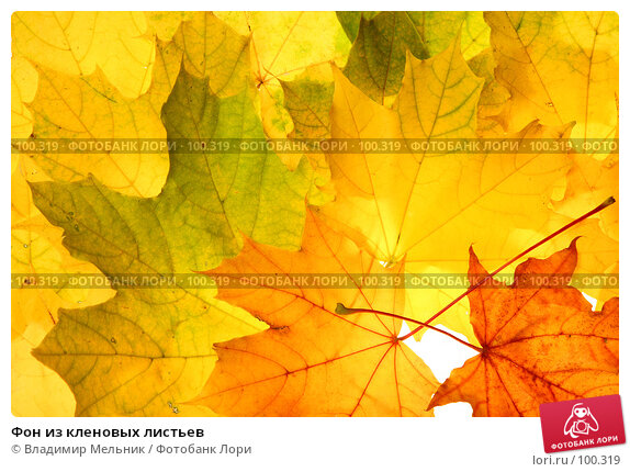 Фон из кленовых листьев, фото № 100319, снято 28 сентября 2007 г. (c) Владимир Мельник / Фотобанк Лори
