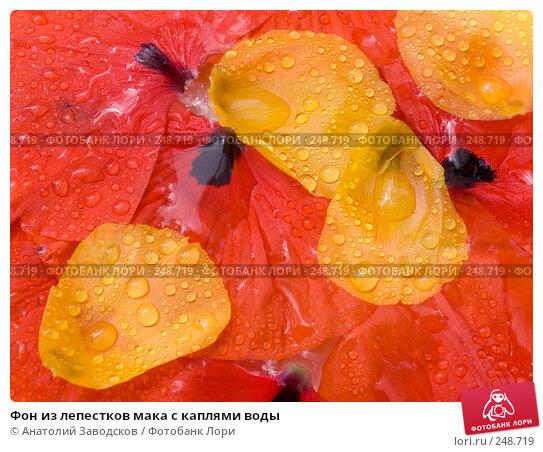 Фон из лепестков мака с каплями воды, фото № 248719, снято 28 мая 2007 г. (c) Анатолий Заводсков / Фотобанк Лори