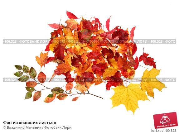 Фон из опавших листьев, фото № 100323, снято 27 сентября 2007 г. (c) Владимир Мельник / Фотобанк Лори