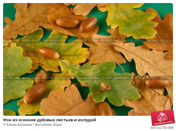 Фон из осенние дубовых листьев и желудей, фото № 93099, снято 4 октября 2007 г. (c) Елена Блохина / Фотобанк Лори