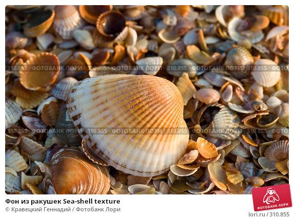 Фон из ракушек Sea-shell texture, фото № 310855, снято 13 августа 2004 г. (c) Кравецкий Геннадий / Фотобанк Лори
