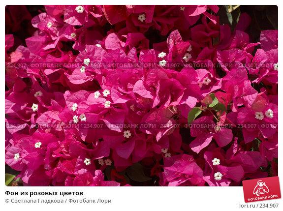 Купить «Фон из розовых цветов», фото № 234907, снято 25 ноября 2017 г. (c) Cветлана Гладкова / Фотобанк Лори