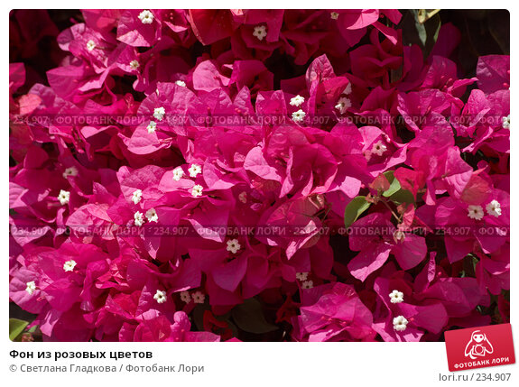 Фон из розовых цветов, фото № 234907, снято 9 декабря 2016 г. (c) Cветлана Гладкова / Фотобанк Лори