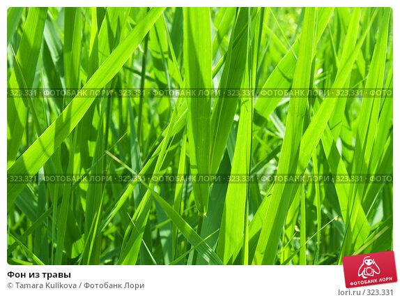 Фон из травы, фото № 323331, снято 15 июня 2008 г. (c) Tamara Kulikova / Фотобанк Лори