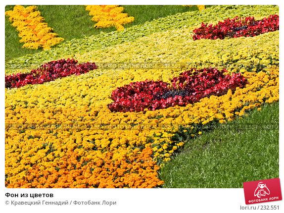 Фон из цветов, фото № 232551, снято 28 августа 2005 г. (c) Кравецкий Геннадий / Фотобанк Лори
