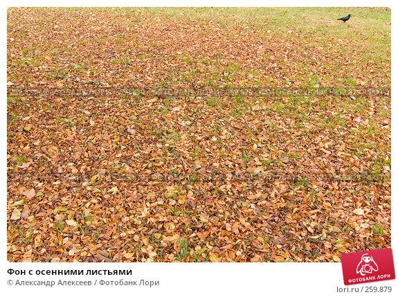 Купить «Фон с осенними листьями», эксклюзивное фото № 259879, снято 30 октября 2007 г. (c) Александр Алексеев / Фотобанк Лори