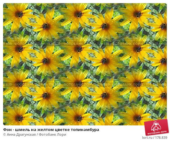 Фон - шмель на желтом цветке топинамбура, фото № 178839, снято 25 августа 2007 г. (c) Анна Драгунская / Фотобанк Лори