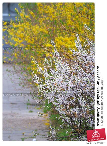 Фон: цветущий кустарник у дороги, фото № 37071, снято 29 марта 2007 г. (c) Крупнов Денис / Фотобанк Лори