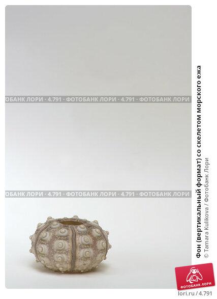 Фон (вертикальный формат) со скелетом морского ежа, фото № 4791, снято 17 июня 2006 г. (c) Tamara Kulikova / Фотобанк Лори