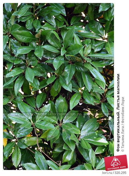 Купить «Фон вертикальный. Листья магнолии», эксклюзивное фото № 320295, снято 24 апреля 2008 г. (c) Татьяна Лата / Фотобанк Лори
