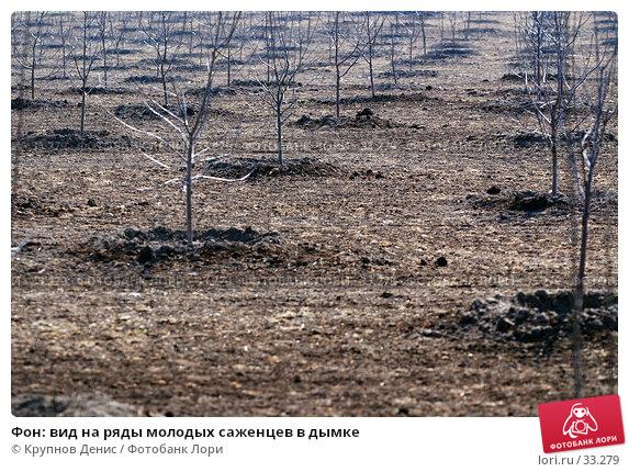 Фон: вид на ряды молодых саженцев в дымке, фото № 33279, снято 17 марта 2007 г. (c) Крупнов Денис / Фотобанк Лори