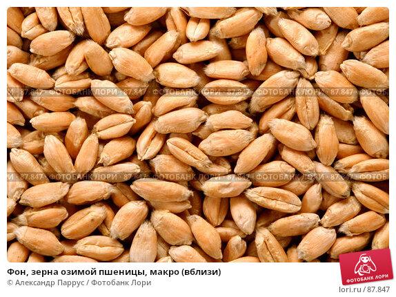 Фон, зерна озимой пшеницы, макро (вблизи), фото № 87847, снято 18 сентября 2007 г. (c) Александр Паррус / Фотобанк Лори